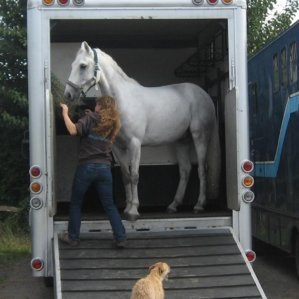 Loading your horse